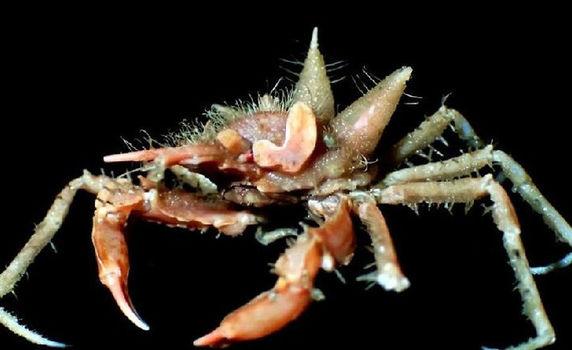 Daha əvvəl heç görülməyən yeni dəniz canlıları kəşf edildi